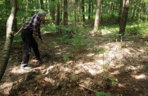 Можно ли собирать в лесу хвойный опад
