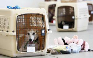 Как отправить собаку багажом в другой город жд транспортом
