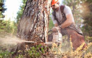 Можно ли уже пилить упавшие деревья в лесу без разрешения