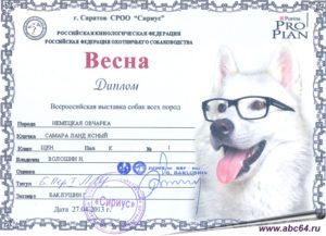 Как получить разводную оценку собаке