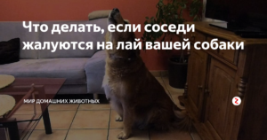 Что делать если соседи жалуются на лай собаки