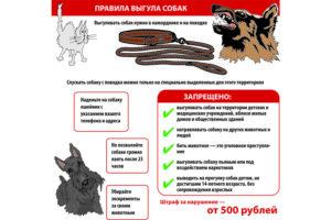 Правила выгула собак в спб закон рф 2020